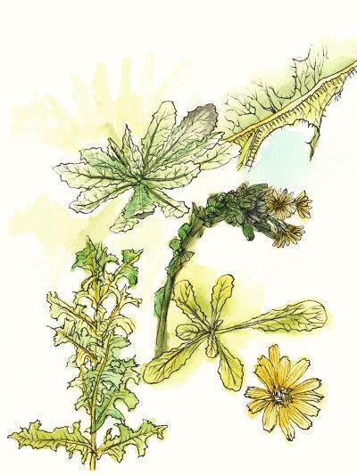 Floral Field Notes V-Melissa Wang-Art Print