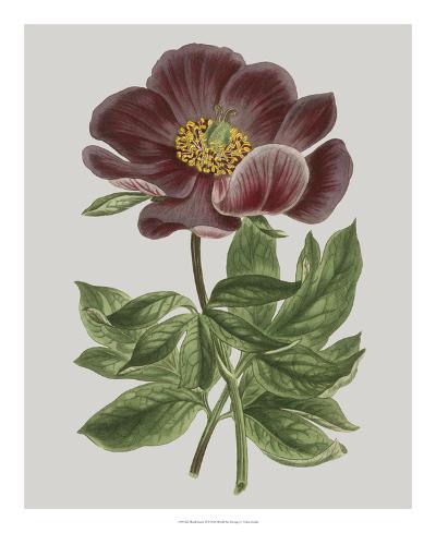 Floral Gems II-Vision Studio-Giclee Print