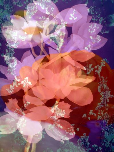 Floral Montage, Photographic Layer Work-Alaya Gadeh-Photographic Print