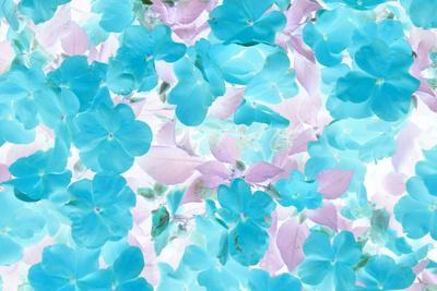 https://imgc.artprintimages.com/img/print/floral-montage_u-l-q11vd3h0.jpg?p=0