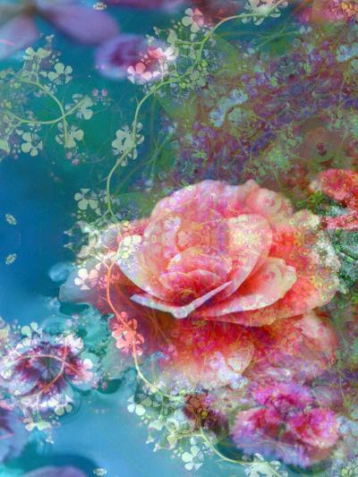 Floral Montage-Alaya Gadeh-Photographic Print