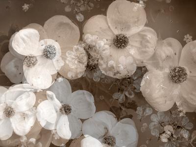 https://imgc.artprintimages.com/img/print/floral-montage_u-l-q11ymdw0.jpg?p=0