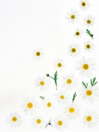 https://imgc.artprintimages.com/img/print/floral-pattern-on-white-surface_u-l-pjwa3u0.jpg?p=0