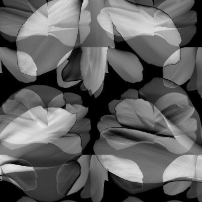 Floral Petals Upon Petals-Winfred Evers-Photographic Print