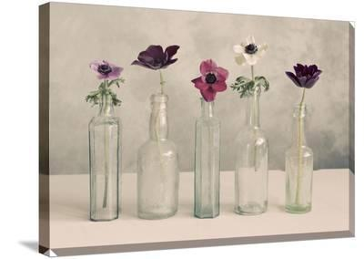 Floral Row Canvas--Gallery Wrapped Canvas
