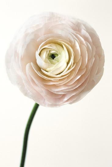 Floral Royale-Irene Suchocki-Giclee Print