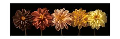 https://imgc.artprintimages.com/img/print/floral-salute_u-l-q1beu420.jpg?p=0