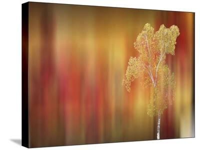 Floral Silhouette-Tatiana Lopatina-Stretched Canvas Print