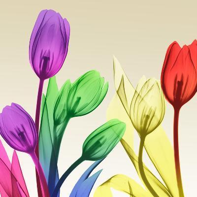 Floral Splurge 2-Albert Koetsier-Art Print