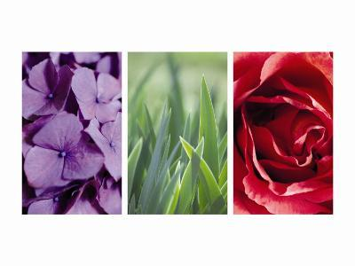 Floral Triptych--Photo