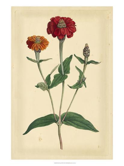 Floral Varieties III-Samuel Curtis-Art Print