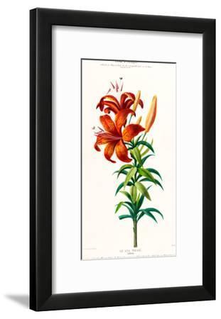 Flored Amerique Lelystigre- New York Botanical Garden-Framed Art Print