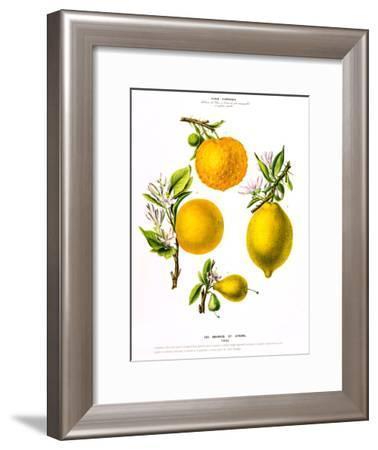 Flored Amerique Lesoranges Etcitrons- New York Botanical Garden-Framed Art Print