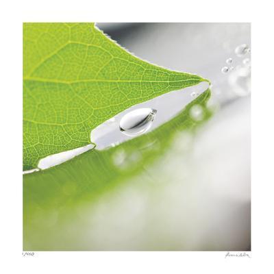 Dew Drops 6