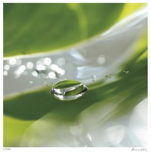 Dew Drops 7 by Florence Delva