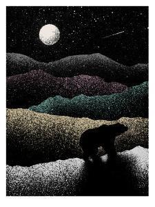 Wandering Bear by Florent Bodart