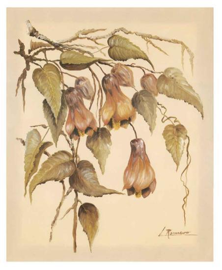 Flores Colgantes III-Luis Romero-Art Print