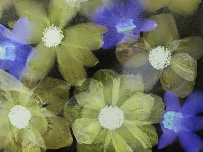 https://imgc.artprintimages.com/img/print/flores-congeladas_u-l-q10pnke0.jpg?p=0