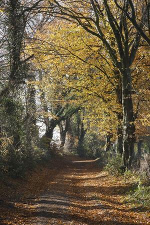 Country Road in Autumn, Hanson, Kornelimunster, Nordrhein-Westfalen, Germany