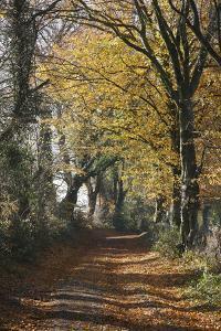 Country Road in Autumn, Hanson, Kornelimunster, Nordrhein-Westfalen, Germany by Florian Monheim