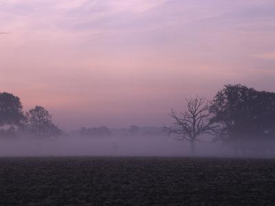Mist at Moyland - Germany