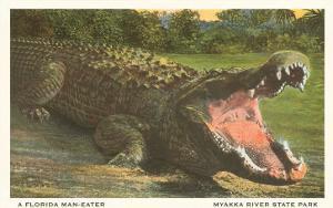 Florida Alligator, Myakka River State Park