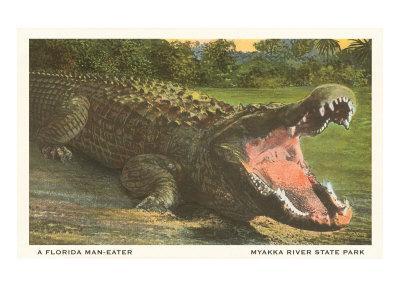 https://imgc.artprintimages.com/img/print/florida-alligator-myakka-river-state-park_u-l-p7budb0.jpg?p=0