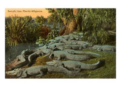 Florida Alligators--Art Print