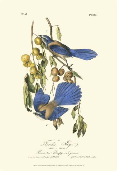 Florida Jays-John James Audubon-Art Print