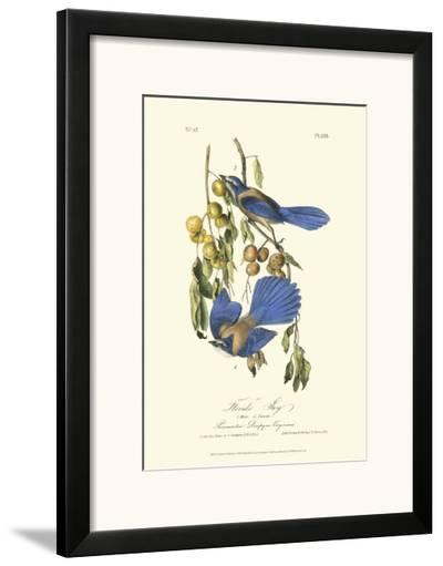 Florida Jays-John James Audubon-Framed Art Print