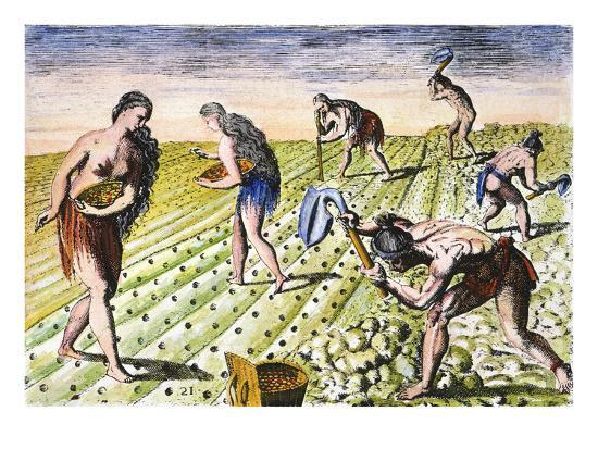 Florida Native Americans:Tilling 1591-Theodor de Bry-Giclee Print