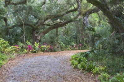 Florida. Road Through Old Trees and Vegetation-Jaynes Gallery-Photographic Print