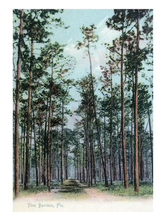 https://imgc.artprintimages.com/img/print/florida-view-of-pine-barrens_u-l-q1gp91t0.jpg?p=0