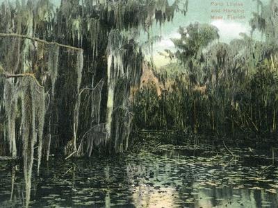 https://imgc.artprintimages.com/img/print/florida-view-of-pond-lilies-and-hanging-moss_u-l-q1gp7x60.jpg?p=0
