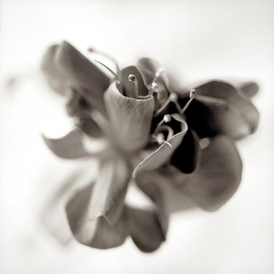Florison #37-Alan Blaustein-Photographic Print