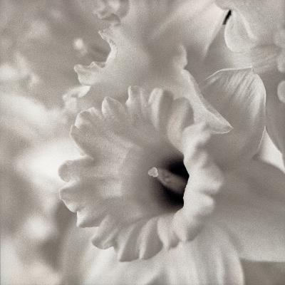 Florison #45-Alan Blaustein-Photographic Print