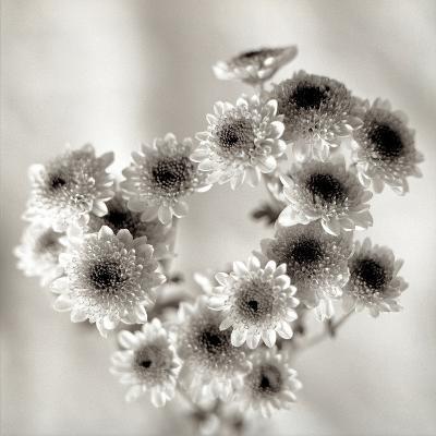 Florison #58-Alan Blaustein-Photographic Print