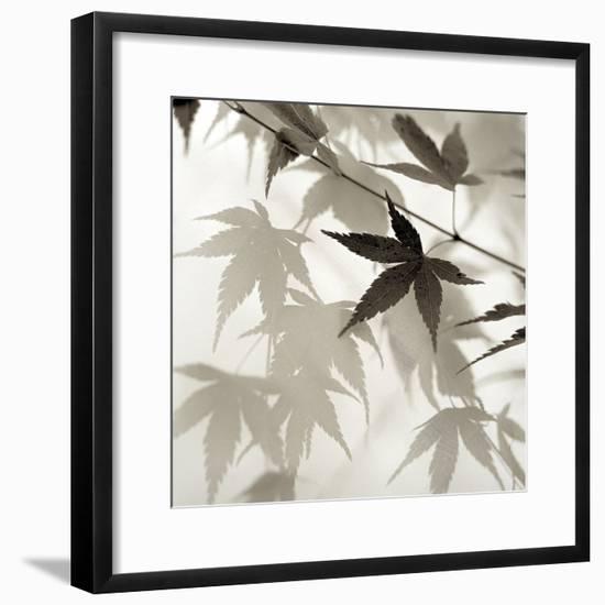 Florison 62-Alan Blaustein-Framed Photographic Print