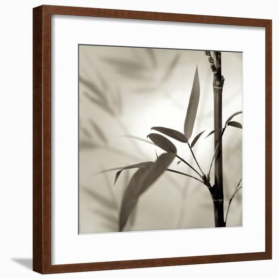 Florison 64-Alan Blaustein-Framed Photographic Print