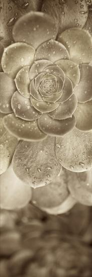 Florison #91-Alan Blaustein-Photographic Print