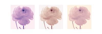 https://imgc.artprintimages.com/img/print/flourish-triptych_u-l-f5iov90.jpg?p=0