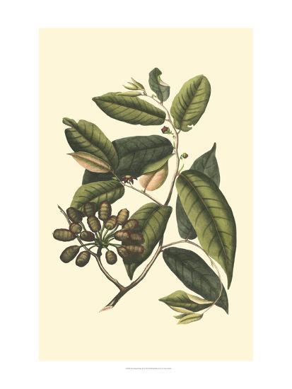 Flourishing Foliage III-Vision Studio-Art Print