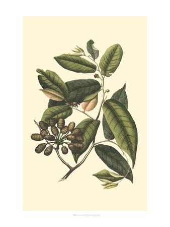 https://imgc.artprintimages.com/img/print/flourishing-foliage-iii_u-l-ph95np0.jpg?p=0