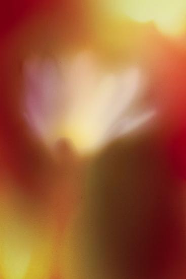 Flower Abstract-Ursula Abresch-Photographic Print