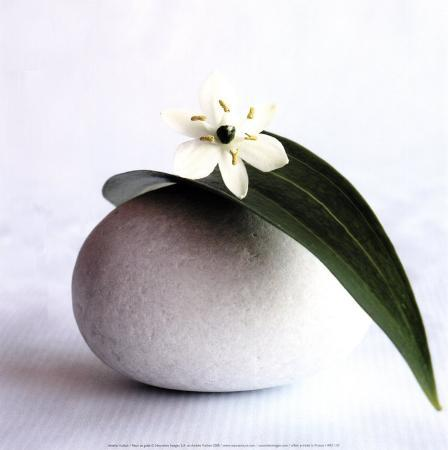 flower-and-pebble