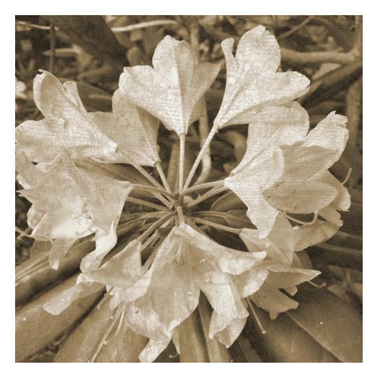 Flower Aroma-Sheldon Lewis-Art Print