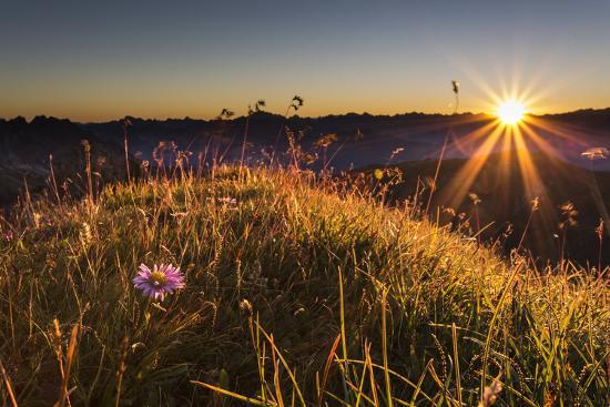 Flower, Aster, Meadow-Jurgen Ulmer-Photographic Print