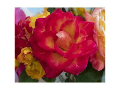 Flower Blooming-Henri Silberman-Photographic Print
