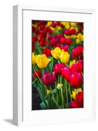 Flower Bright-Jason Matias-Framed Giclee Print