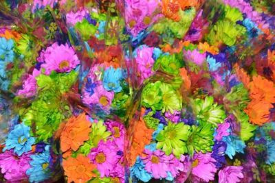 https://imgc.artprintimages.com/img/print/flower-collage_u-l-q1cqa8u0.jpg?p=0